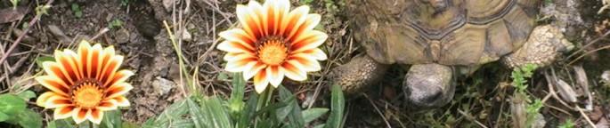 cropped-img_14303.jpg