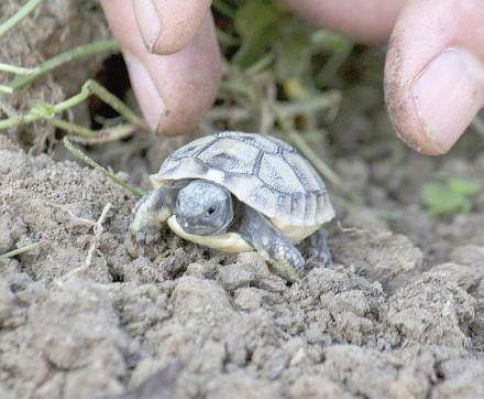 Il mondo delle tartarughe a castelnuovo bormida in for Tartarughe grandi